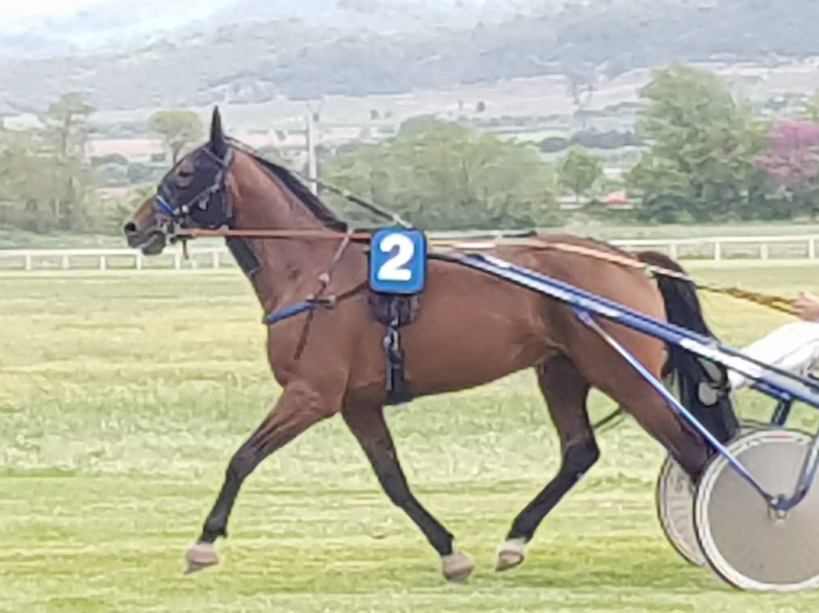 cheval-4-ans-pour-courses-en-Belgique