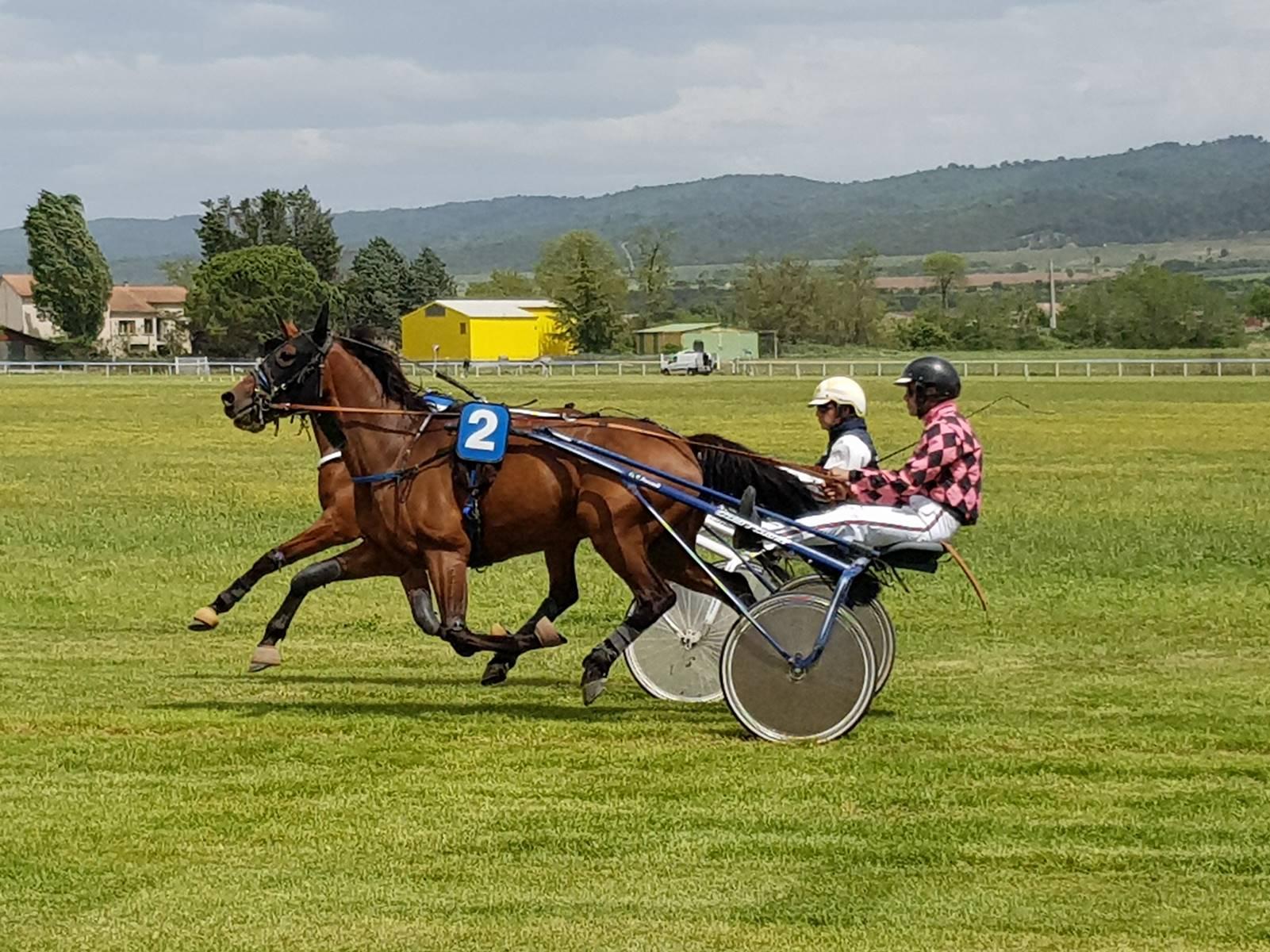 cheval-4-ans-pour-courses-en-Belgique-0
