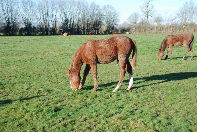 HARAS-TROTTEURS-19-HECTARES-A-VENDRE