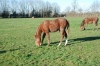 HARAS-TROTTEURS-19-HECTARES-A-VENDRE-2