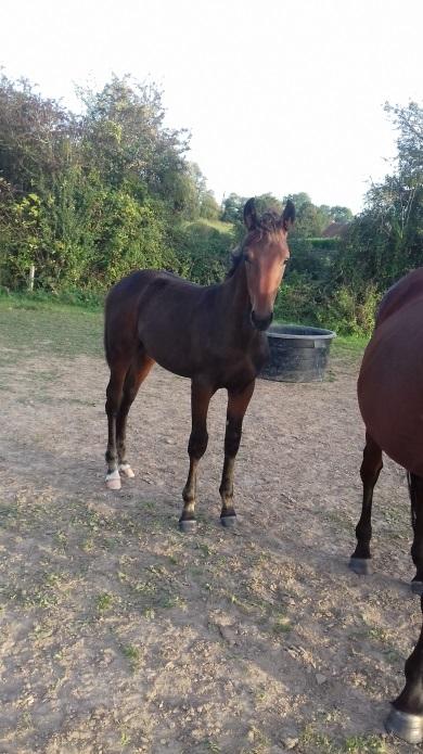 Foal-et-pouliniere-1ere-categorie-prime-de-sa©lection--0