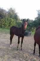 Foal-et-pouliniere-1ere-categorie-prime-de-sa©lection-