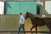 Da©bourrage-a©thologique--ra©-a©ducation-chevaux-compliqua©s--remise-en-confiance