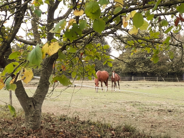 Propose-pensions-chevaux
