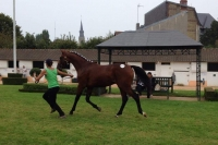 Preparation-de-yearling-