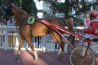 8-ans-hongre--performances-tra¨s-stables--pour-la-suisse--l---allemagne--la-belgique-ou-l---angleterre