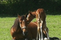 Options-d---achat--foals-sharing