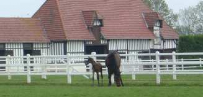Soigneur-equin-bovin