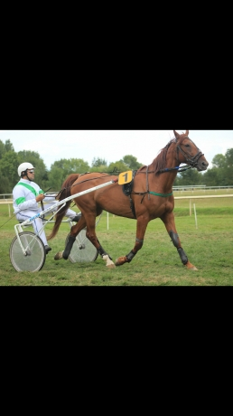 cheval-8-ans-