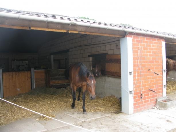 Cherche-chevaux-a-Location-carriere-de-courses
