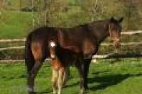 Recherche-options-d---achat-ou-foals-sharing-pour-mes-poulinia¨res