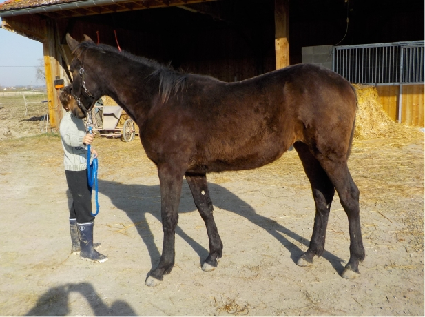 Yearling-par-Up-and-Quick--super-lignee-maternelle