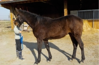 Yearling-par-up-and-quick--super-ligna©e-maternelle
