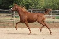 Da©bourrage-pra¨-entraa®nement-chevaux-au-repos