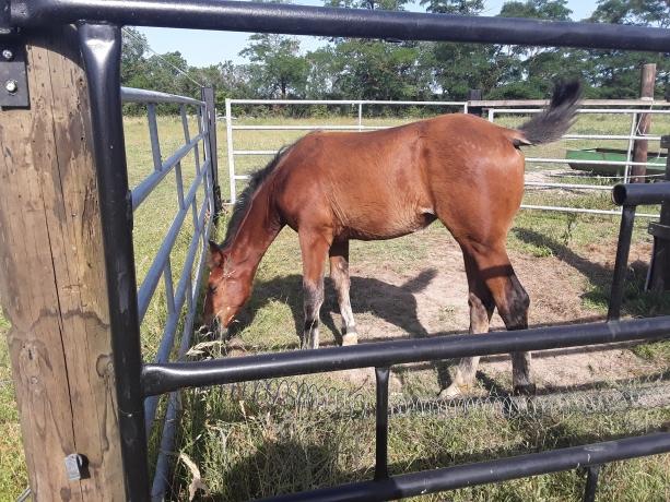 Vend-ou-location-foals