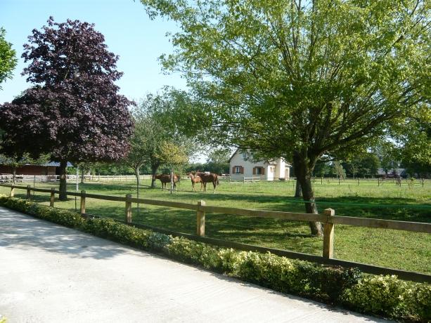 recherche-chevaux-en-pension-au-champ-a-Quetteville