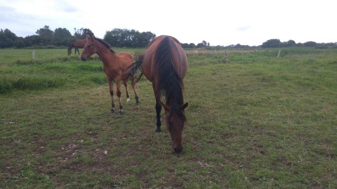 Arteria-pleine-de-Dijon-avec-foal-de-Dollar-Macker-1