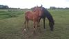 Arteria-pleine-de-Dijon-avec-foal-de-Dollar-Macker-0