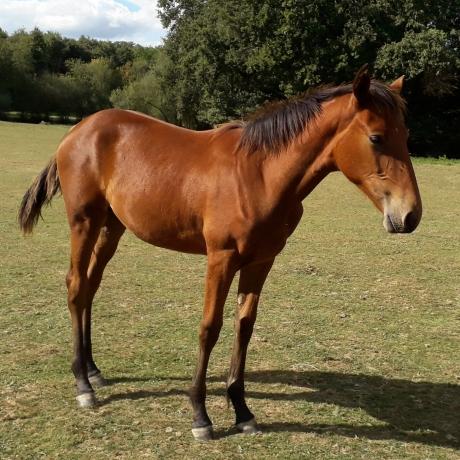 TF--foal-femelle-J--par-LAETENTER-DIEM