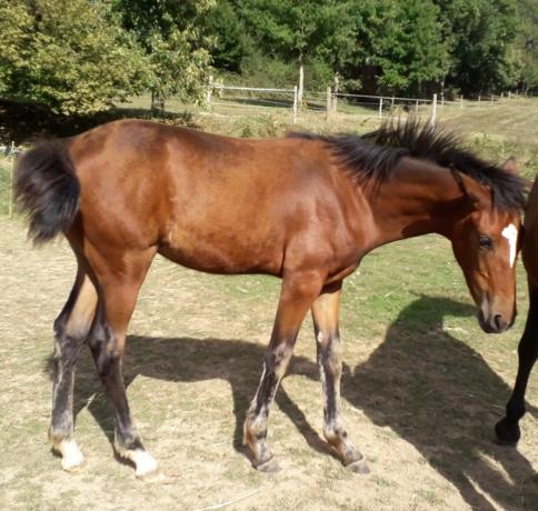 TF--foal-femelle-J--par-Oakwoo-du-closet