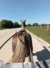 Ra©essaie-chevaux-monter--attela©