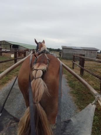 ra©essaie-chevaux-monter--attela©-0