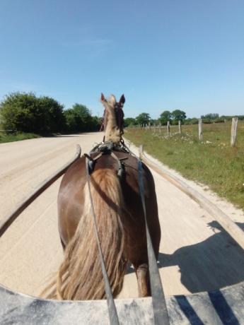 Recherche-chevaux-a-courir-0