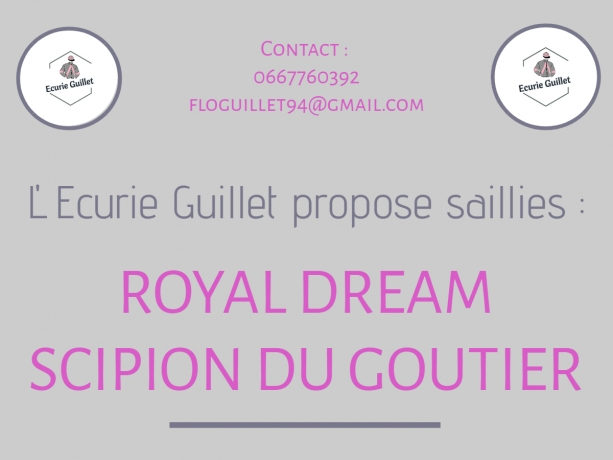 Vends-saillies-SCIPION-DU-GOUTIER-et-ROYAL-DREAM