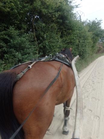 Reessaie-chevaux