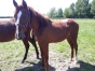 vente-yearling-jackpot-tonic-0