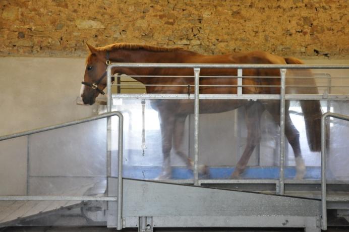 Marcheur-tapis-roulant-Horse-Gym-2000