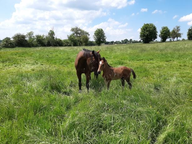 Vends-mes-foals-et-poulinieres