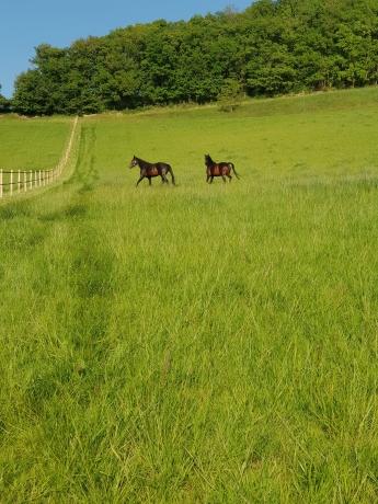 Pension-pour-chevaux-au-repos-et-poulinieres-
