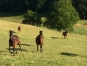 Pension-pour-chevaux-au-repos-et-poulinia¨res--0