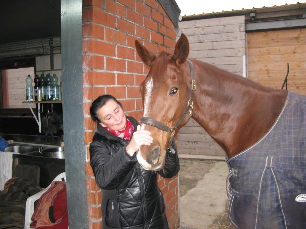 Cherche-chevaux-pour-la-Belgique-et-le-Nord