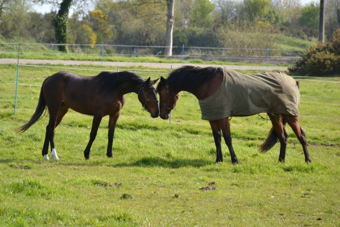 Pension-pour-chevaux