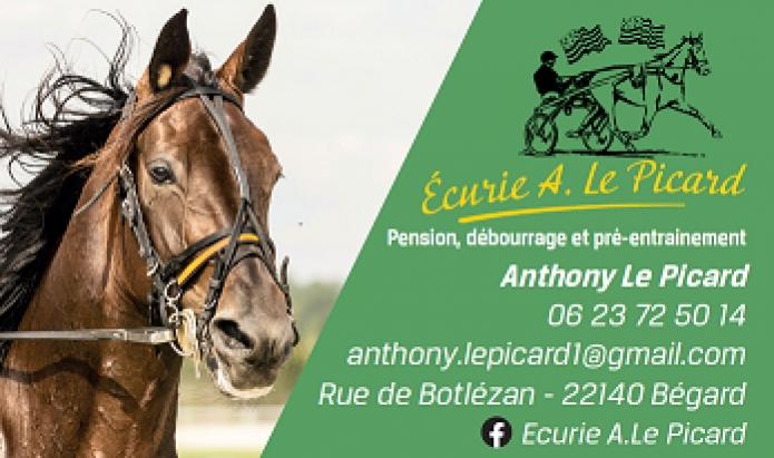 Pension-pour-chevaux-1