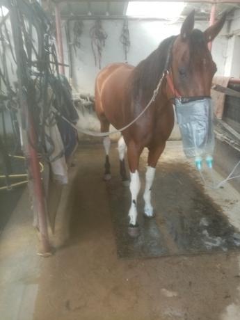 Essaie-ou-ra©essaie-chevaux-2