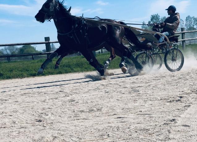 Essaie-ou-ra©essaie-chevaux-0