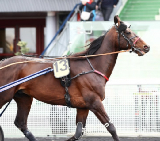 Saillie-Doberman-(TVA)--35--de-qualifies-dans-les-I