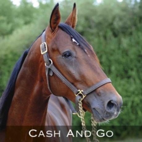Vends-PART-de-CASH-AND-GO-(Ready-Cash-X-Reethi-Rah-Jet)-sans-TVA