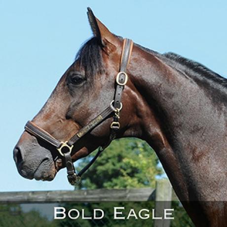 Bold-Eagle-0
