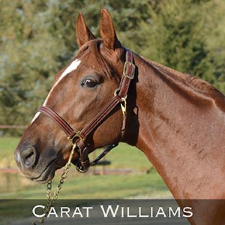 Carat-Williams-0