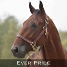 Ever-pride
