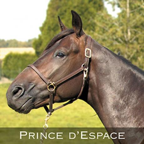 Prince-d---Espace-0