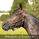 Prince-d---espace