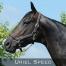Uriel-Speed-0