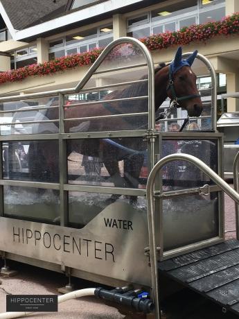 Tapis-roulant-aquatique-Protrainer-Water--HIPPOCENTER
