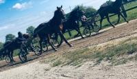 Ra©essaie-chevaux-attela©-et-monta©