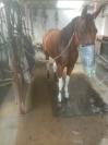 Recherche-chevaux-a-courir